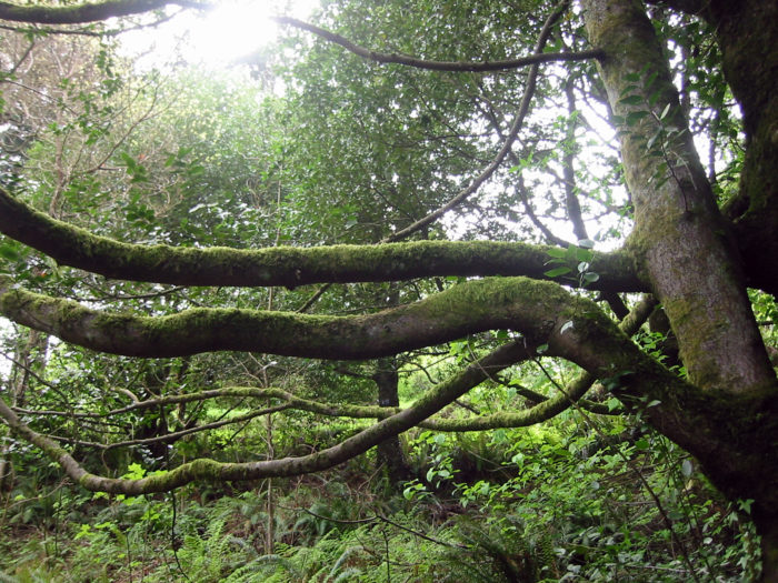 9. Hoyt Arboretum