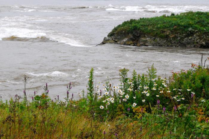 6. Go watch the Reversing Falls, West Pembroke.