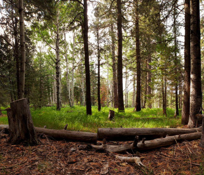 Camp Arizona Reservations: 8 Secluded Places To Visit In Arizona