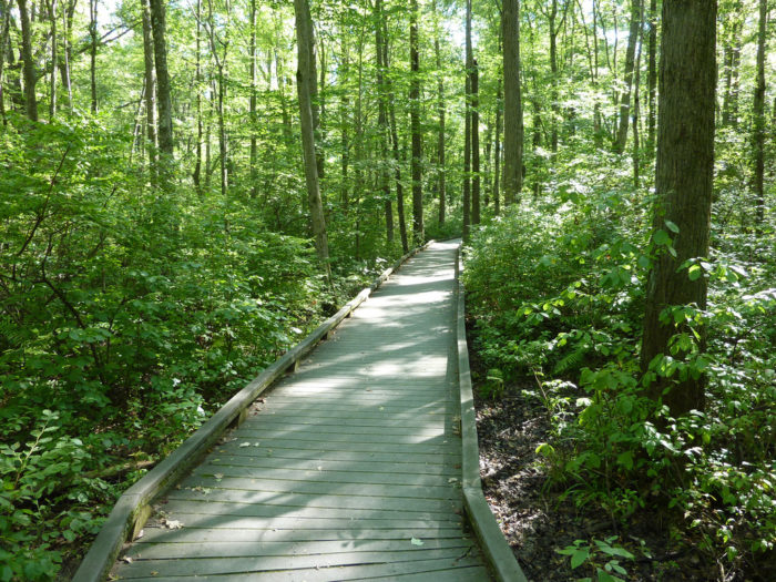 11. See The Great Swamp