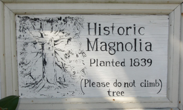 Even the trees in Washington State Park are historic.