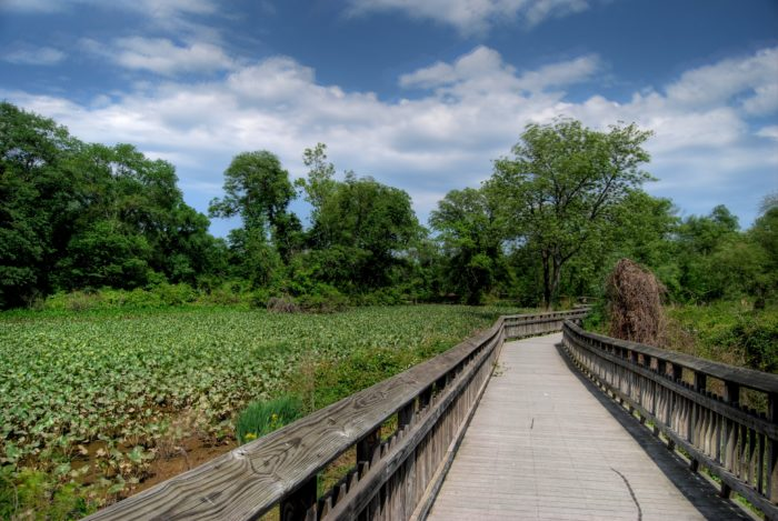 There is a boardwalk trail or if you'd like to hike, there is a dirt path that leads you closer to the Anacostia River.