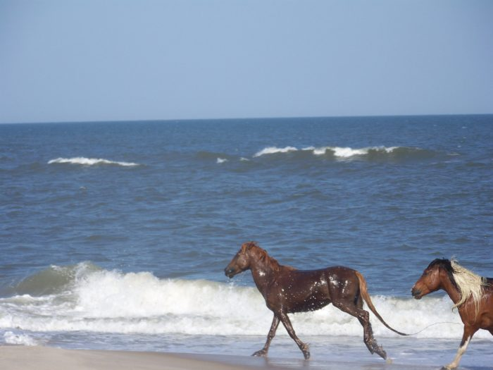 10. Assateague State Park