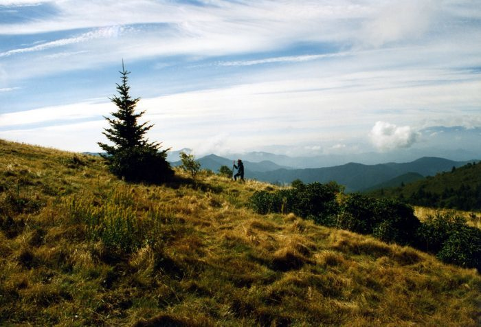 10. Hike to the amazing grassy balds of North Carolina found at Roan Mountain and Max Patch.