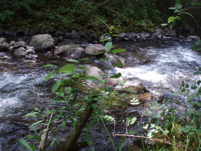 2. Eagle Creek