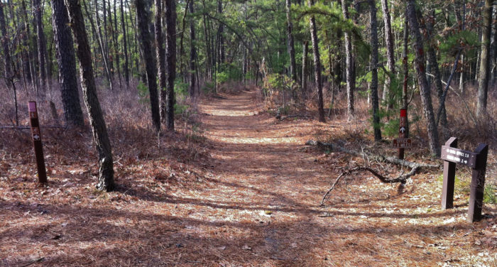 6. Batona Trail at the New Jersey Pinelands