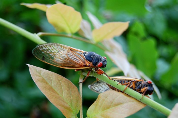 5. You've experienced swarms of cicadas and you still have nightmares about it.