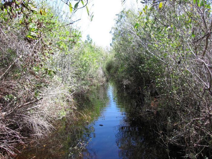 3. Bradwell Bay Florida Trail, Apalachicola National Forest