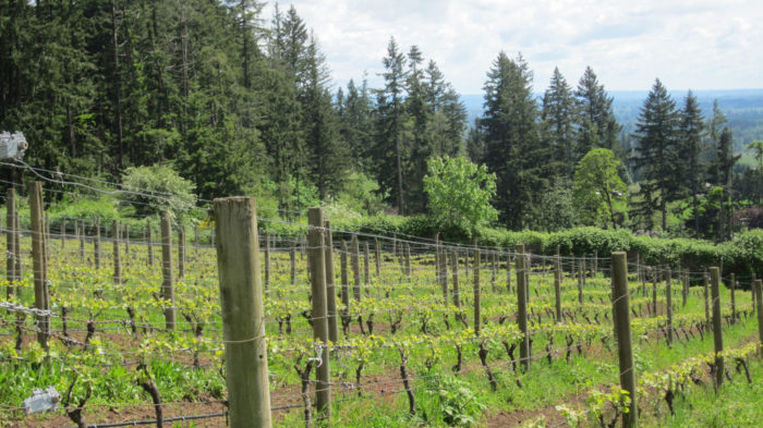 There's a vineyard in West Linn...with a view like this!