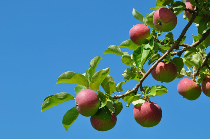 20.  Pick your own apples.