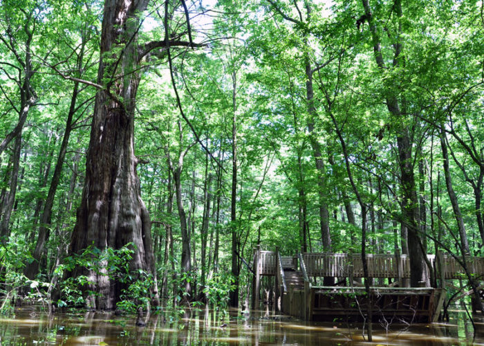 6. Sky Lake Wildlife Management Area, Belzoni