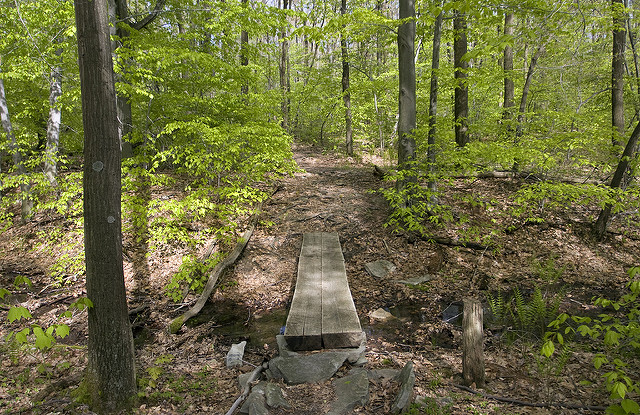 7. Shades of Death Trail - Hickory Run State Park