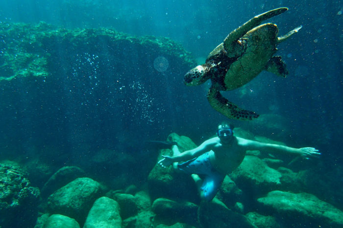 6. Swim with sea turtles.