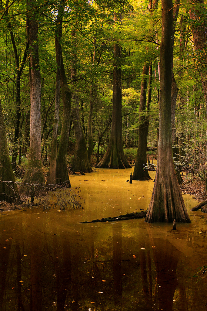 3. Congaree National Park - Hopkins