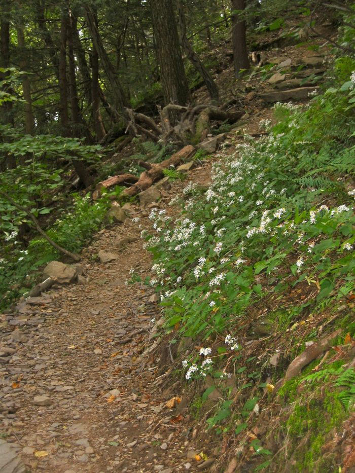 The trail is edged with wildflowers during the spring season.