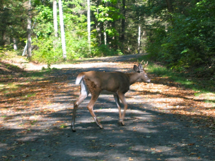 Don't be surprised if you run into a few local residents on your way to Mount Tom.
