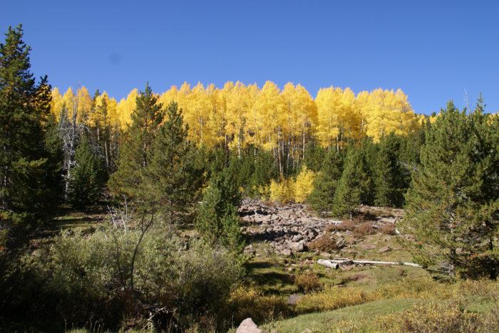 1. Ashley National Forest