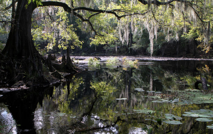 High Spring offers endless outdoor opportunities, on the Santa Fe River or one of the gorgeous crystal-clear springs, including the popular Ginnie Springs, Blue Springs, and nearby Ichetucknee Springs.