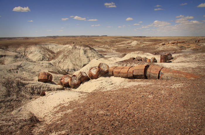 7. Petrified Forest