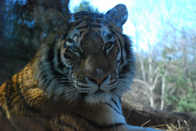 7. Take a walk on the wild side at the Pittsburgh Zoo & PPG Aquarium.