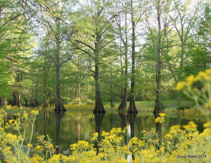 7. Cypress Preserve, Greenville