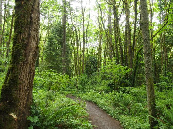 6. Tryon Creek State Park