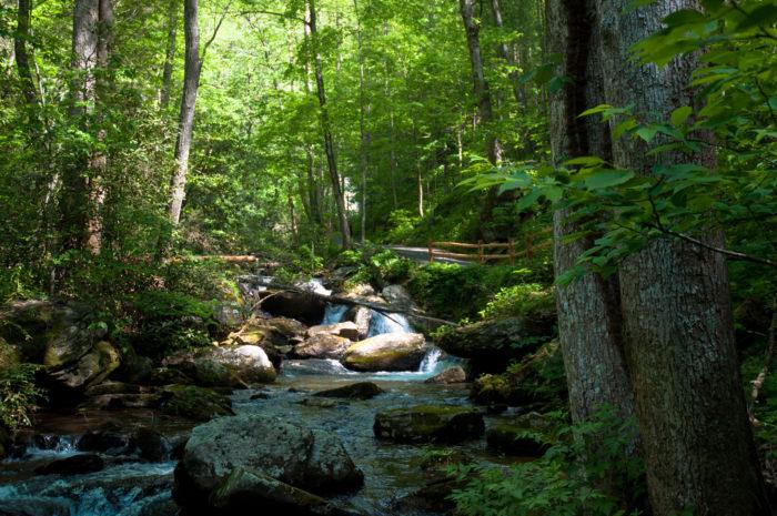 1. Anna Ruby Falls Trail—0.8 miles