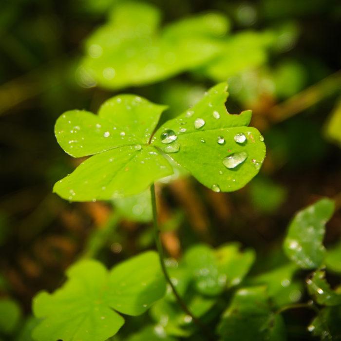 6. Complain about the rain.