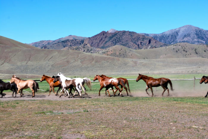 7. Visit a true Wyoming ranch