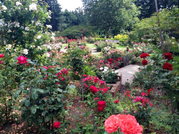 6. International Rose Test Garden