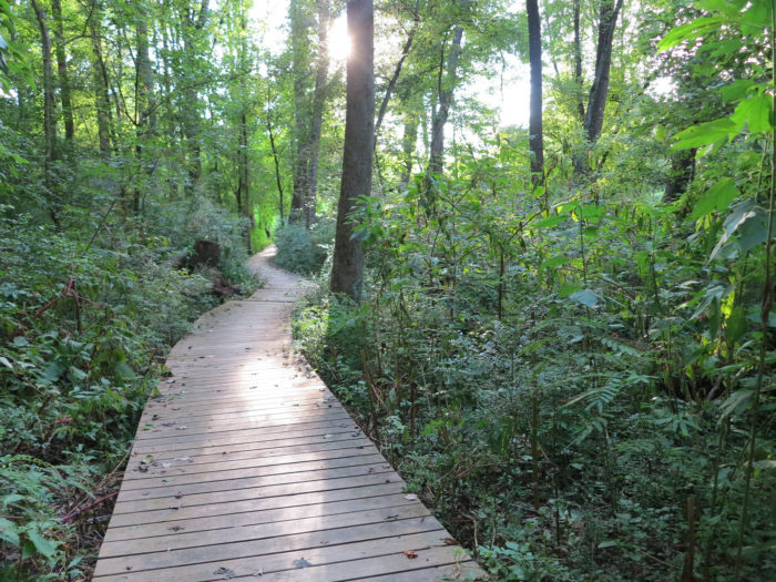 12. Morningside Nature Preserve—2 mile loop