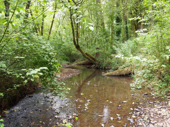 3. Tryon Creek State Park Loop