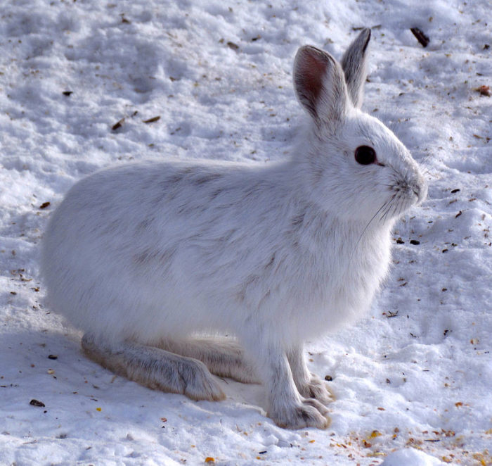 The high elevation provides a home to animals that are usually only seen in Canada.
