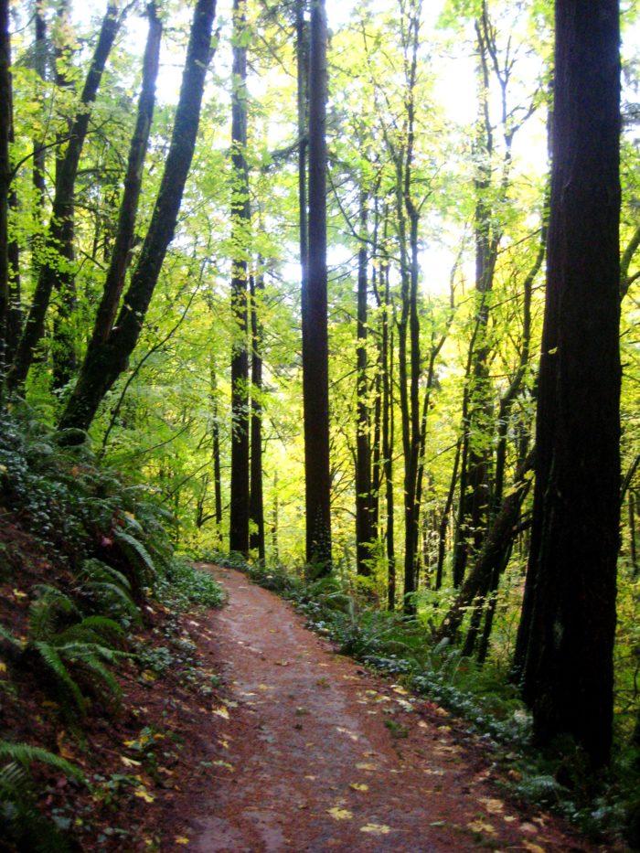 2. Hoyt Arboretum Loop