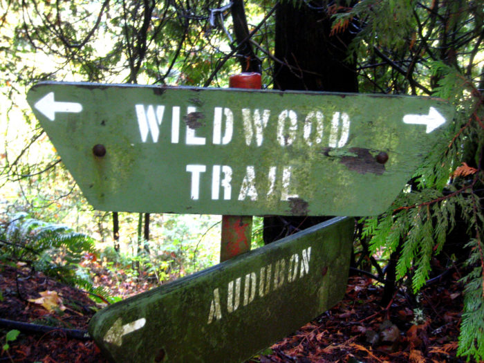 1. Wildwood Trail