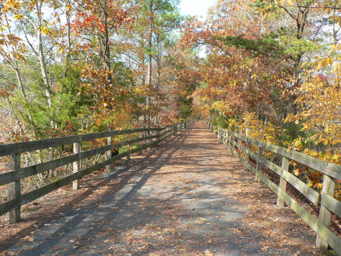 4. The Junction and Breakwater Trail, Cape Henlopen State Park