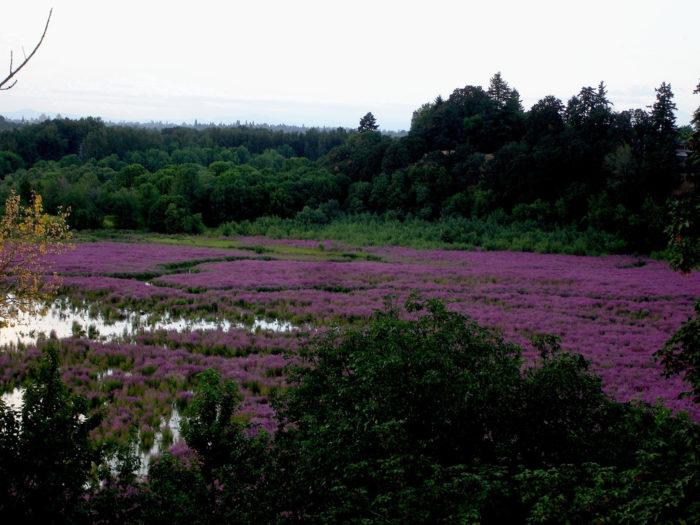 3. Oaks Bottom Wildlife Refuge Loop