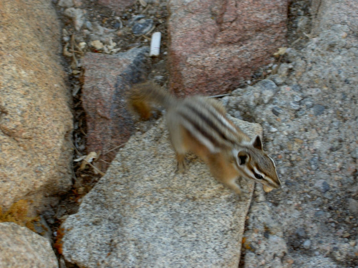 14. Feed your cigarette butts to the squirrels, trails, and streets.