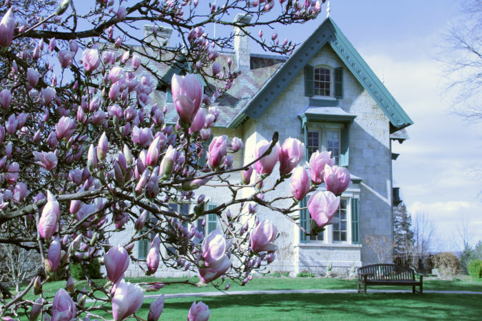The museum in springtime is a work of art in itself.