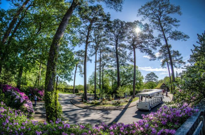 12. Stroll around one of Virginia's breathtaking botanical gardens.