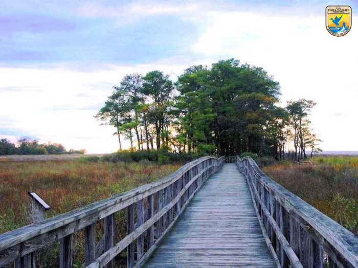 There are several miles of paths and bridges for you to explore...