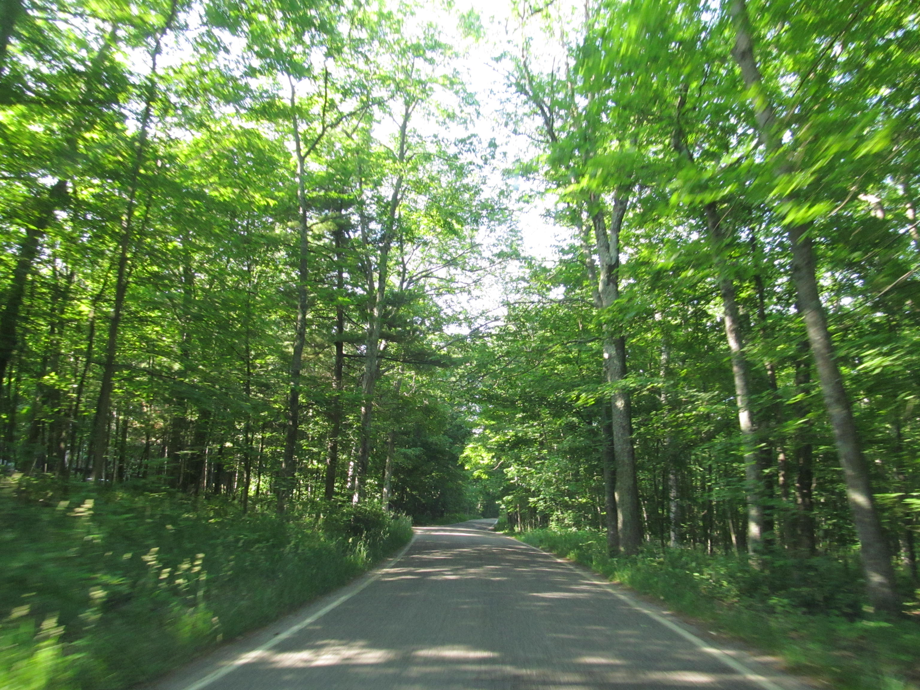 Michigan\'s Tunnel Of Trees Is Truly Incredible