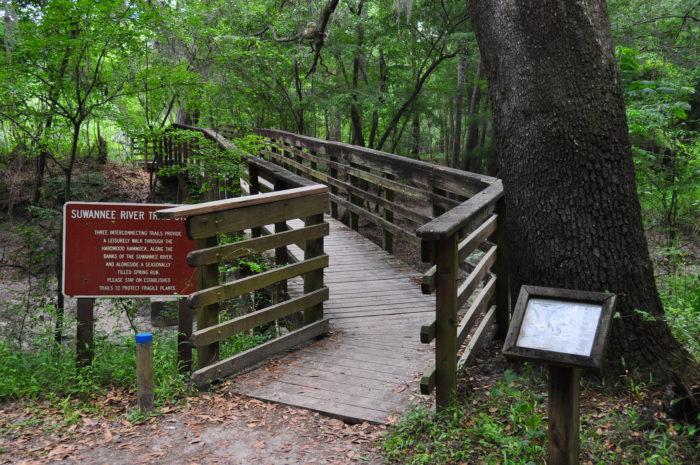 6. Suwannee River State Park