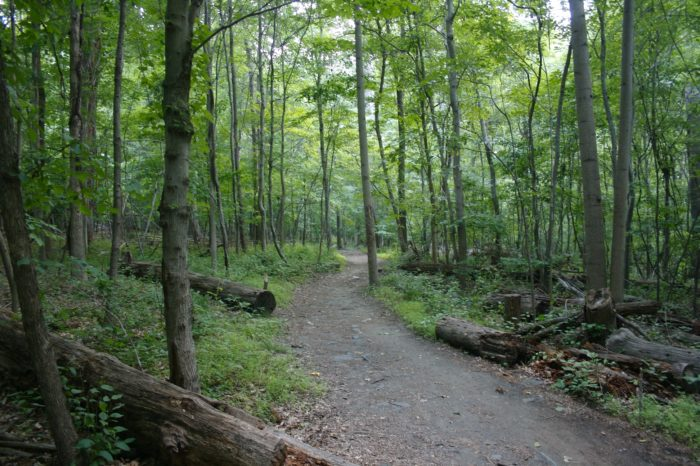 Patapsco Valley State Park spans 32 miles, through parts of Howard, Baltimore, and Anne Arundel counties.