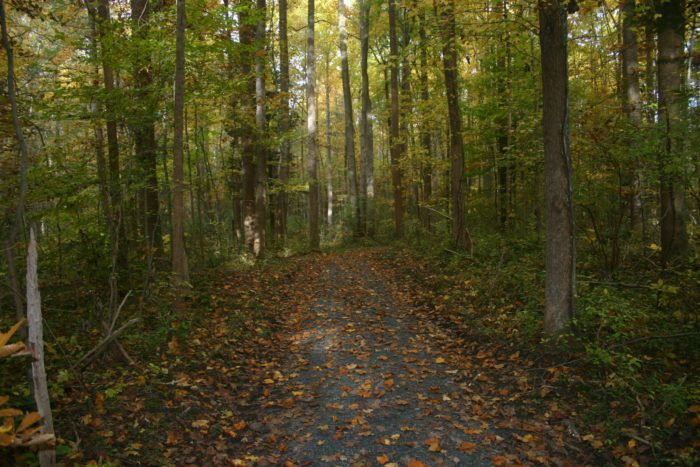 Blackbird State Forest features over 40 miles of trails on 9 tracts, totaling almost 5500 acres of preserved forest.