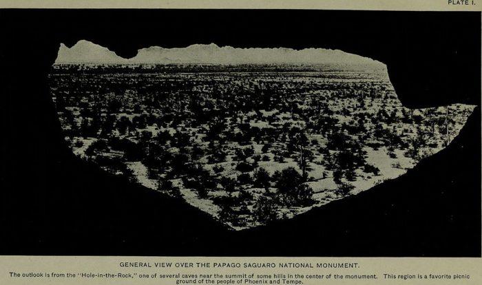 Birds_of_the_Papago_Saguaro_National_Monument_and_the_Neighboring_Region,_Arizona_(1920)_(14748369324)