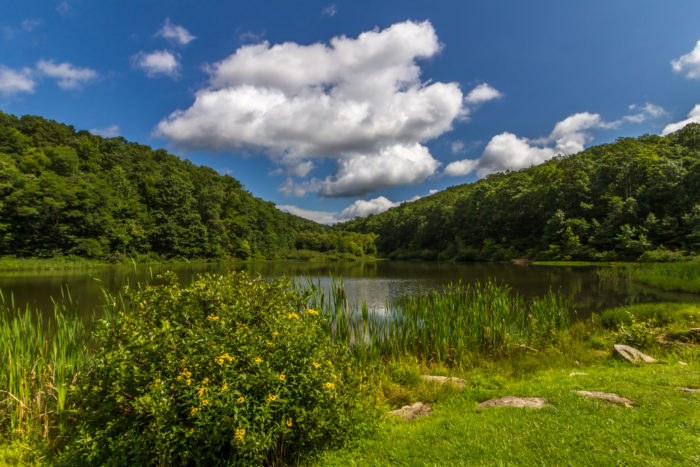 Coopers Trout Pond