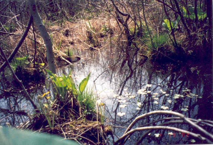 3. Cowles Bog - Chesterton