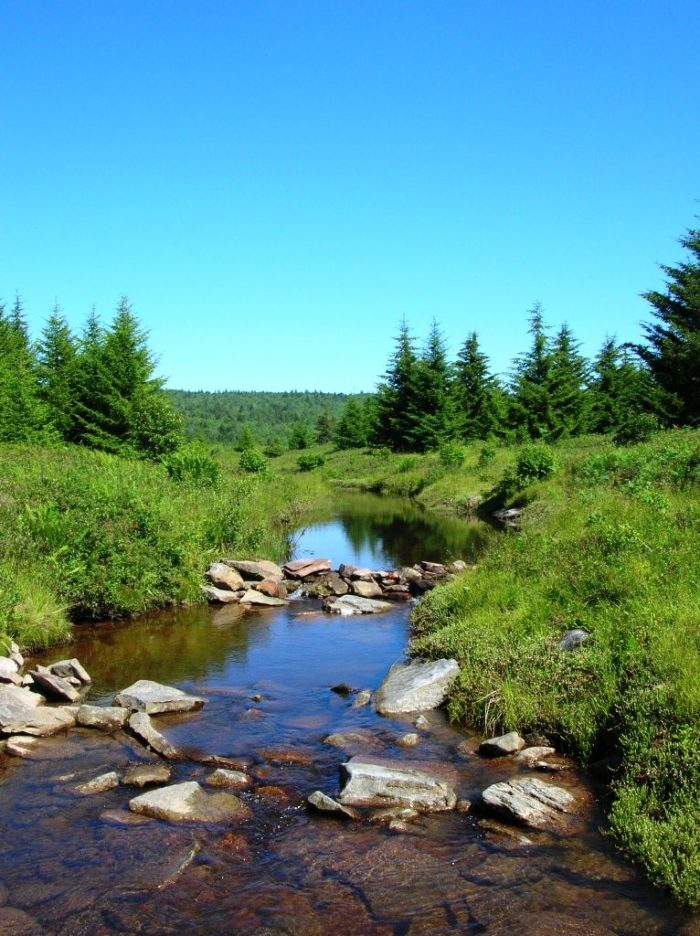 6. Dolly Sods Wilderness,  Monongahela National Forest