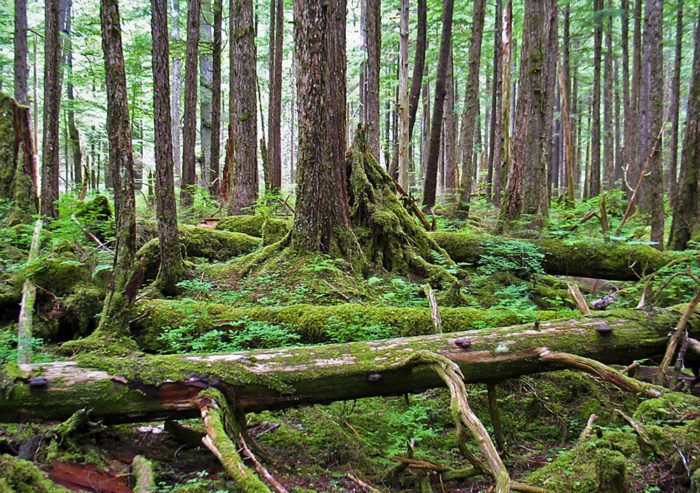 1. It is home to the largest temperate rainforest in the US.